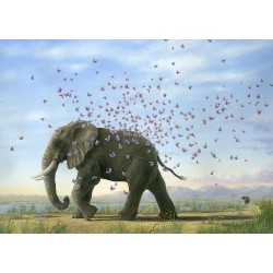 Robert Bissell - METAMORPHOSIS